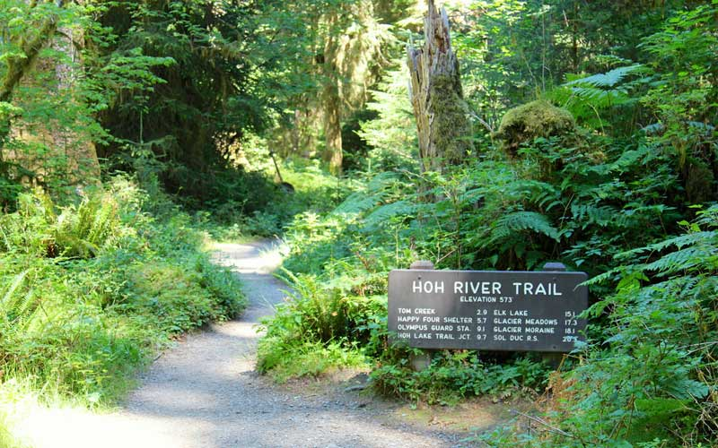 Hoh River Trail - Olympic National Park, WA