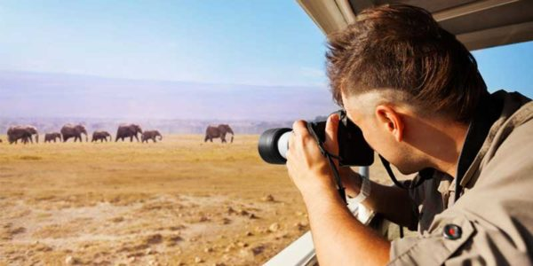 Best Affordable Cameras for Wildlife Photography