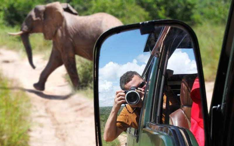 A man is focusing an elephant