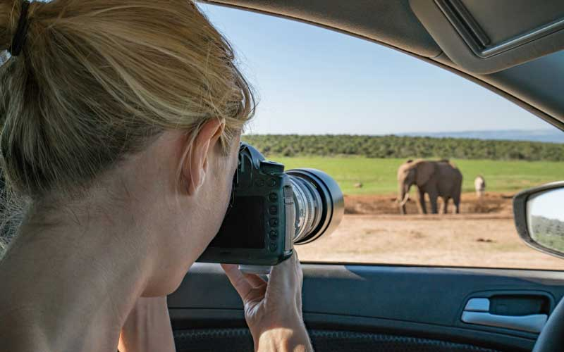 A women is taking a photo of an elephant from the car